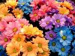fiori_003