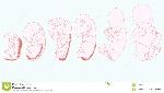 anatoma-del-desarrollo-infantil-64128017