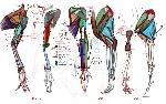 Anatomia humana, y anatomia comparada, ciencias de joseleg