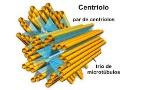centrilos microtubulo