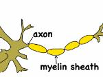 axonandmyelin