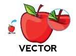 website_vector