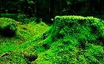 briofitas2