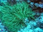que-comen-las-algas