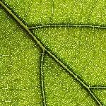 nature-pattern-photography-1