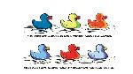 Ducks colours