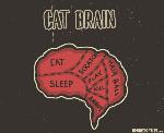 cat-brain