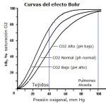 efecto-bohr3-300x294