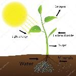 depositphotos_33182823-stock-illustration-scheme-of-photosynthesis