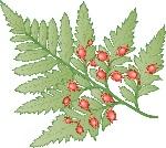 seed fern