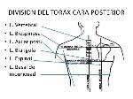 anatomia-del-torax-4-638