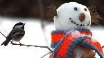 tomtit_bird_snowman_scarf_snow_winter_59859_1920x1080