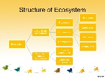 Structure+of+Ecosystem