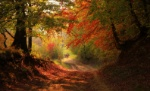 Entrance-to-the-autumn-forest