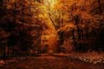 39162922-autumn-forest