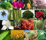 260px-Plantas_-_reino_plantae