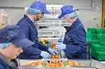 75691173-control-de-calidad-de-los-trabajadores-de-inspección-de-los-tomates-en-la-línea-de-producción-en-la-planta-d