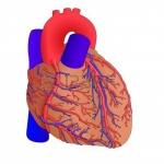 heart pt 2