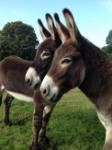 donkeysx2