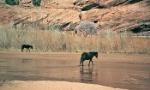 wild-horses-350
