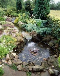 Garden-Pond-With-Shallow-Bottom-72195623-56a4a0c95f9b58b7d0d7e493