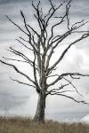 arbre_de_la_mort