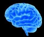 kisspng-blue-brain-project-neuroimaging-pink-brain-blue-b-blue-brain-material-picture-5a723f519dbda3.3468883415174367536461