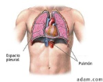 Torax-Pulmones