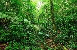 12985103-열대-우림-풍경