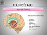 telencfalo-funcin-cognitiva-y-procesamiento-de-las-emociones-10-638