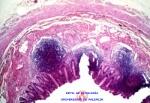 apendice-10x