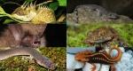 nuevas-especies-en-el-mekong.jpg.imgw.1280.1280