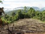 deforestacion_cambio_climatico