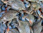 maryland-blue-crab