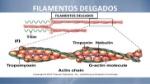fisiologia-muscular-esqueletica-9-728