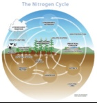 The_Nitrogen_Cycle1