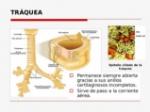 anatoma-y-fisiologa-del-aparato-respiratorio-27-638