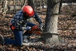 Person cutting tree