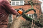 94138772-arborist-chainsawing-pieces-of-wood-of-cut-down-old-oak-