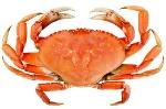 crabe crustacées
