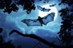 Como-se-orientan-los-murcielagos-en-la-oscuridad