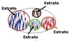 Estratificado1
