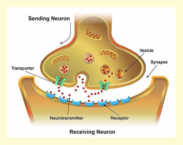 neurotrans_graphic3