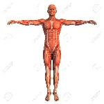 9403313-cuerpo-humano-Foto-de-archivo