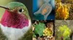 app-para-identificar-plantas-y-animales-de-méxico-naturalista-conabio-0