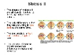 Meiosis+II+The+stages+of+meiosis+II+are+all+exactly+identical+to+the+happenings+from+mitosis.