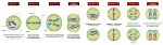 Meiosis_Stages.svg