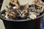Abandoned-Kittens