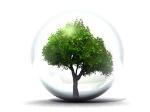 c3a1rbol-esfera