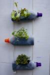 Verticaal-tuinieren-juni-144-238x358